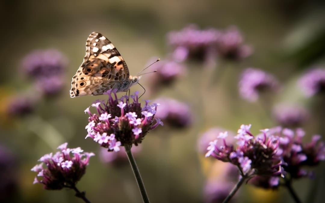 Bienen, Hummeln, Schmetterlinge