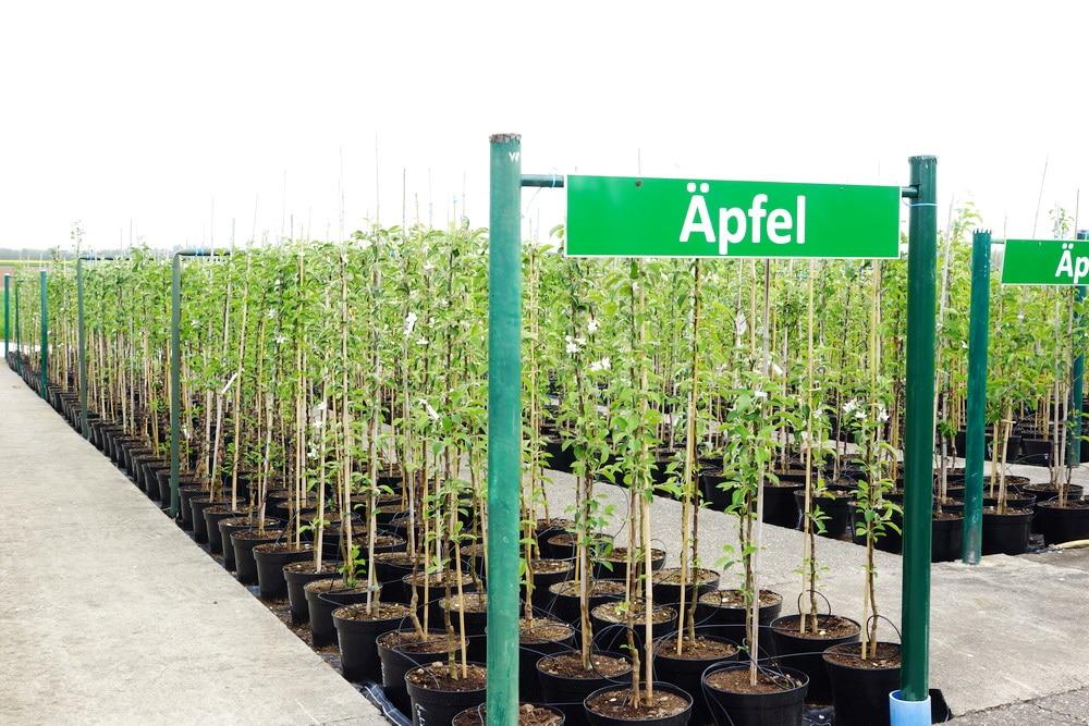 Bäume pflanzen – fast das ganze Jahr möglich?