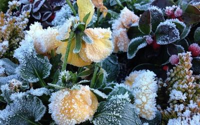 Gartentipps für Februar