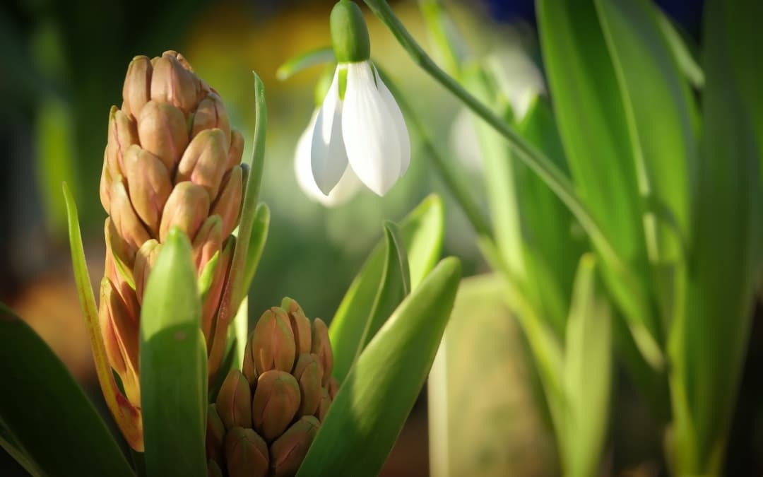 Gartentipps für März