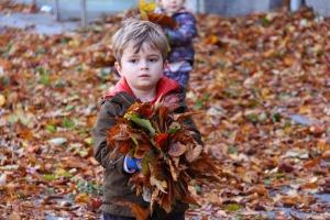 Warum verlieren die Bäume ihre Blätter