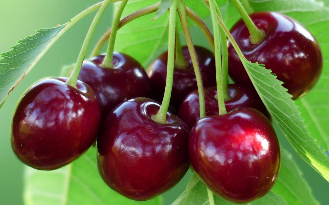 Eigenes Obst - ernten und genießen