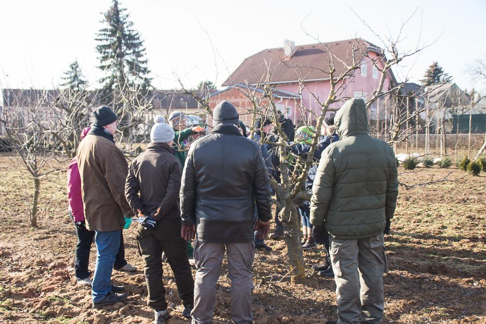 obstbaumschnittkurs-2019 04