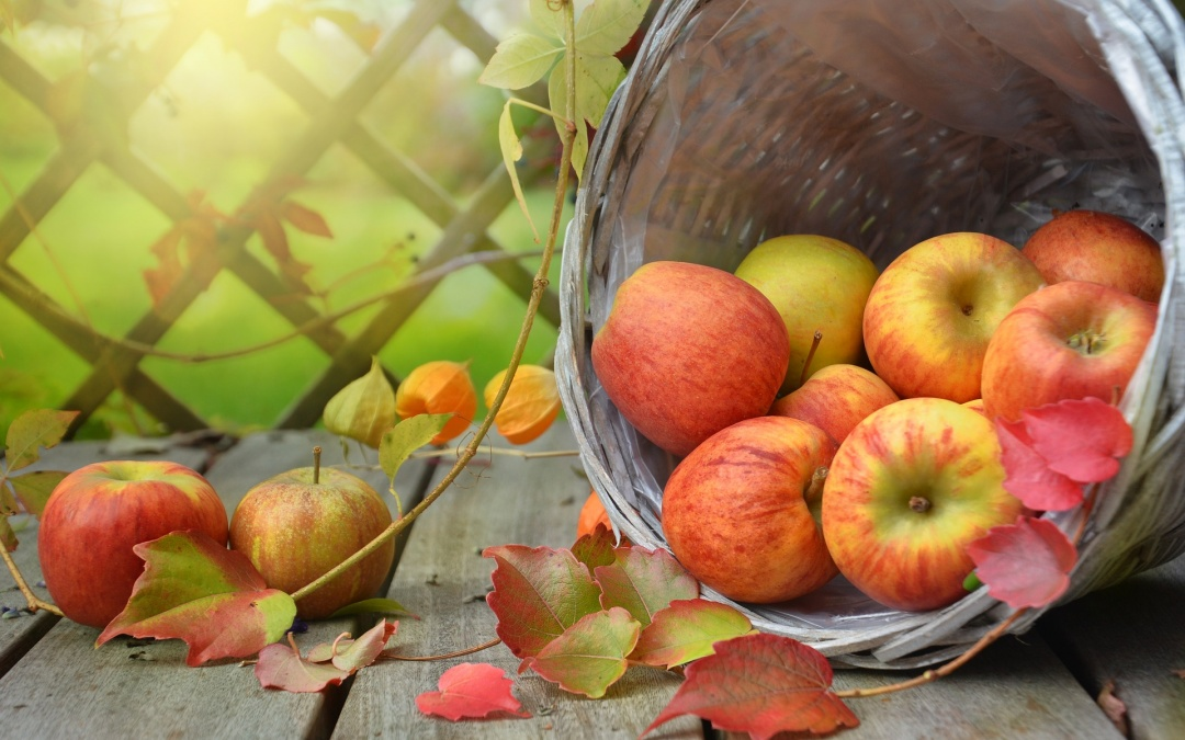 Tag des Apfels 2019