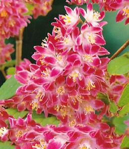 Blütensträucher und -stauden