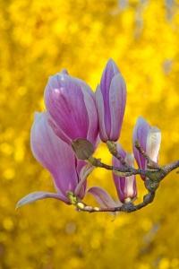 Im Ostern beginnt im Garten wieder alles zu blühen.